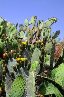 Free Cactus View Royalty Free Stock Image - 5021446