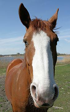 Free Horse Stock Photography - 5022102