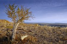 Free Tree At Fish River Canyon Stock Photography - 5022332