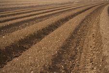 Free Symmetrical Soil. Royalty Free Stock Photos - 5023178