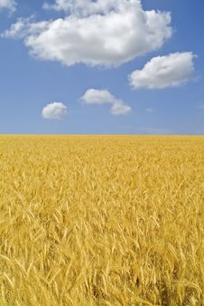 Free Wheat Field Royalty Free Stock Images - 5023609