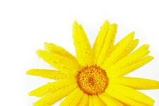 Free Yellow Flower Royalty Free Stock Images - 5023749