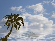 Free Palm Ocean And Sky Royalty Free Stock Images - 5024399