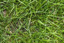 Free Green Grass Background Stock Photo - 5024490