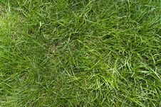 Free Green Grass Background Stock Image - 5024491