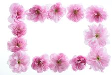 Free Floral Frame Royalty Free Stock Images - 5024499