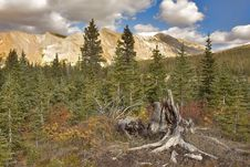 Small Fur-trees At High Mountains. Royalty Free Stock Photos