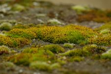 Free Moss On Stone 1 Stock Photography - 5024682