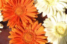 Free Orange And White Flower Stock Photos - 5025353