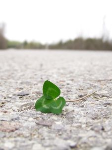 Free Clover On Road Royalty Free Stock Image - 5025846