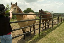 Free Horse Farm Stock Photos - 5026443
