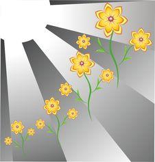 The Flowers And Sun. Stock Photos