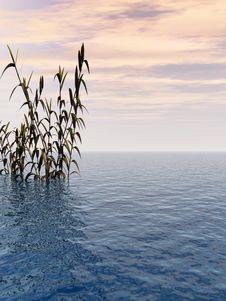 Free Water Grass Stock Photo - 5029410