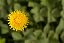 Free Bright Dandelion Flower With Copy-space Royalty Free Stock Photos - 5029818