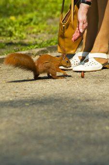 Free Squirrel Stock Photos - 5029903