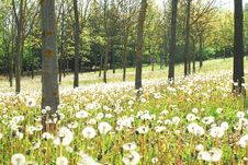 Free White Flowers In The Forest Royalty Free Stock Image - 5029976