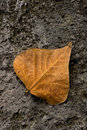 Free Solitary Leaf Stock Photography - 5036312