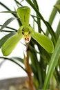 Free Orchid  Ji Yuan  Stock Photo - 5036470
