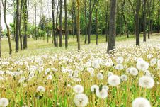 Free White Flowers In The Forest Royalty Free Stock Photo - 5030075