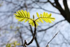 Free Spring, Young Green Leaves Stock Image - 5030411