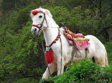 Free One White Horse In Forest Royalty Free Stock Photography - 5030547