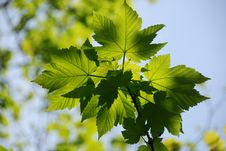Free Springtime Sunlight Through Th Stock Image - 5031391