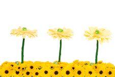 Free Yellow Chrysanthemum Decoration Stock Photography - 5032292