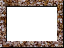 Free Seashell Frame Stock Images - 5033034