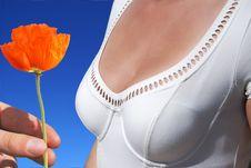 Free Single Flower Stock Photography - 5033242