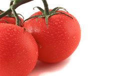 Free Three Fresh Tomatoes Royalty Free Stock Images - 5033299