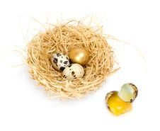 Free Nest With Golden Egg Royalty Free Stock Photos - 5033518