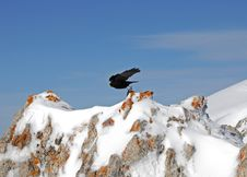 Free Bird In The Mountains Stock Photos - 5033763