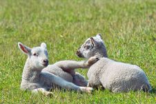 Free Two Lambs In The Grass Stock Photo - 5033940