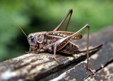 Free Grasshopper On The Trunk Stock Photos - 5034263