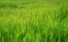 Free Photo Of A Green Glade With A Young Grass Stock Photography - 5034712
