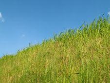 Free Grass Royalty Free Stock Photo - 5034755