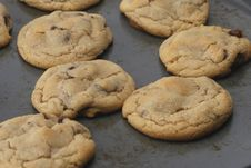 Free Chocolate Chip Cookies Stock Photo - 5034790