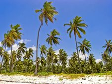 Free Tropical Island Royalty Free Stock Photo - 5035115
