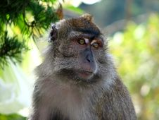 Free Monkey In Jungle Stock Photos - 5035173
