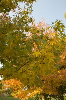 Free Autumn Leaves Stock Photography - 5035512