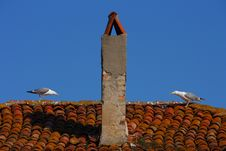 Free Gulls On A Roof Royalty Free Stock Photo - 5036255