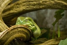 Free Fat Lady Frog Stock Image - 5036631