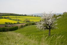 Free Blossoming Tree In Spring In Rural Scenery Stock Photo - 5037530