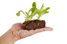 Free Growing Green Plant In A Hand Stock Photography - 5038202