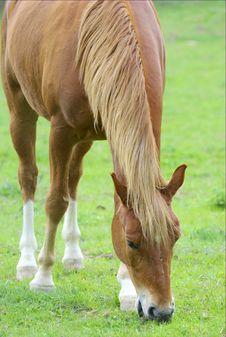 Free Horse Royalty Free Stock Photo - 5039405