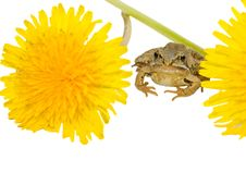 Free Frog Stock Image - 5039621