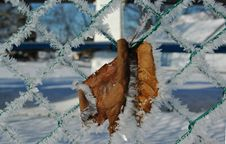 Free Leaf On Fence Stock Image - 5040071