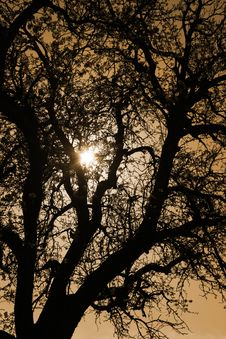 Free Tree Silhouette At Sunset Royalty Free Stock Photo - 5040135