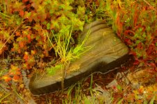 Free Mountain Boots With Plants Royalty Free Stock Photos - 5040158