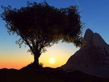 Free Tree Royalty Free Stock Image - 5040556